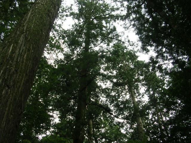 Tsubaki's trees